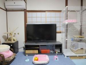 ロシ子の新居です。