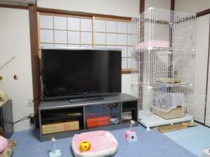 ロシ子の新居。