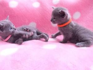 小ちゃい子猫ちゃん。