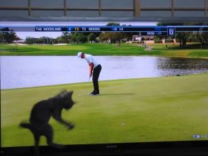 テレビの中のゴルフボールを追いかけるロシ子。