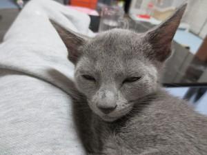 眠くなるロシ子ちゃん。