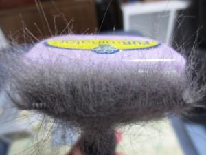 ロシ子の抜けた毛です。