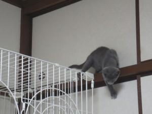 下りようとするが、怖いロシ子。
