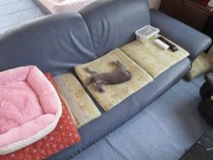 私の指定席で寝るロシ子。