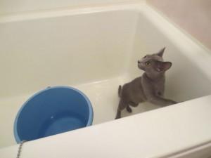 浴室のロシ子。