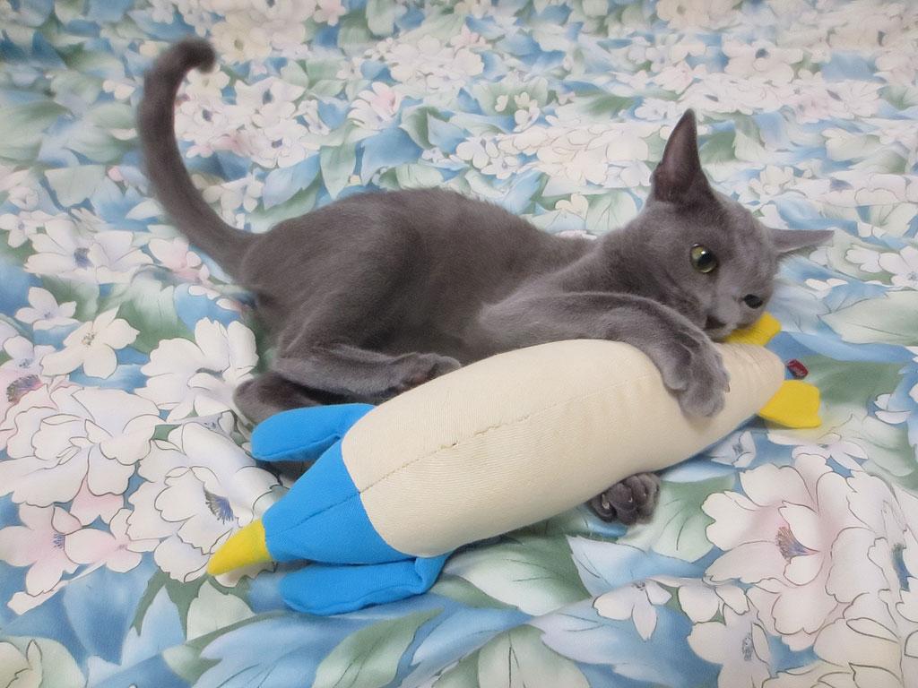 おもちゃにキックするロシ子。
