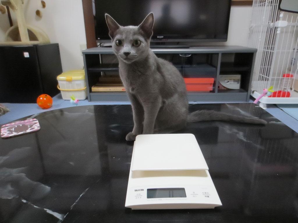 ロシ子の体重を測る風景。