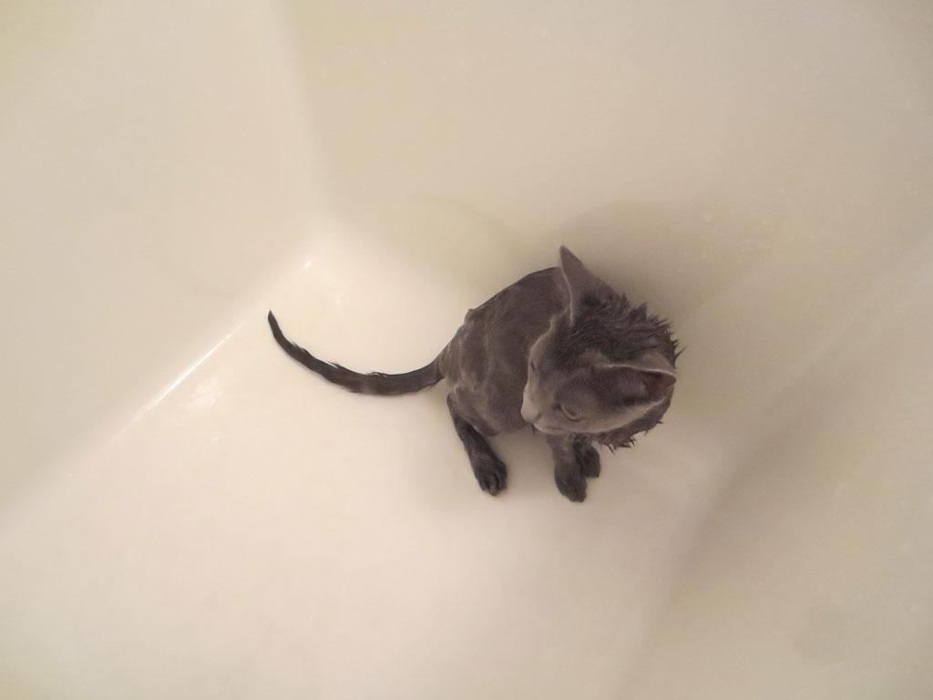 風呂場のロシ子。