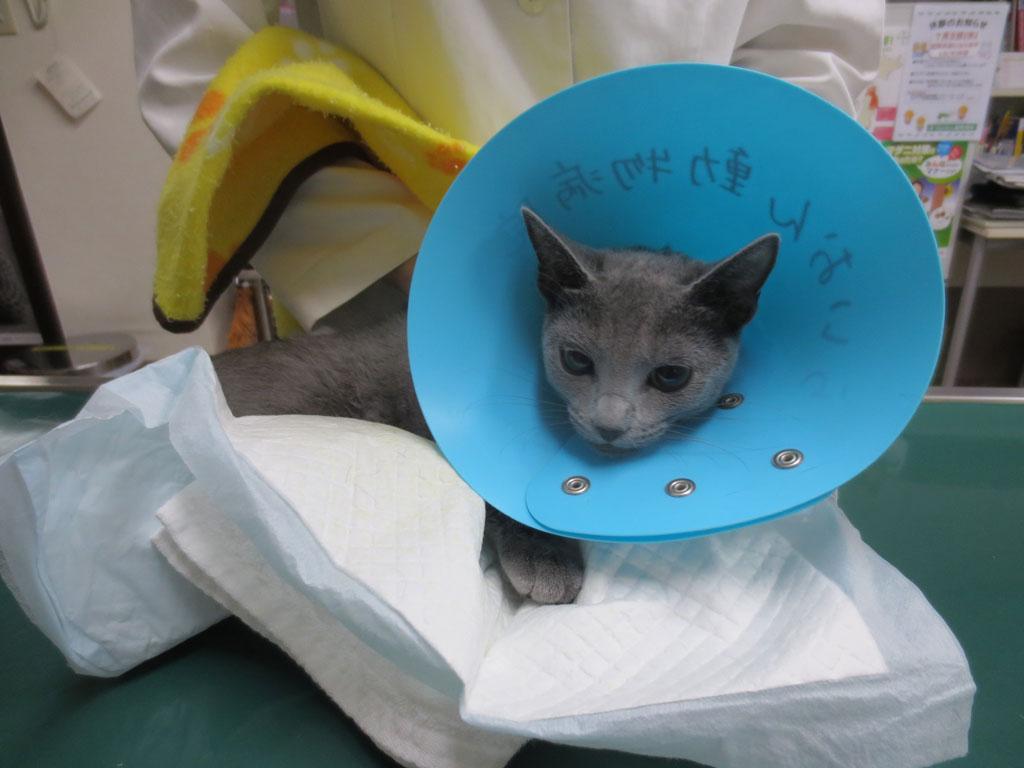 ロシ子の手術が無事、終わりました。