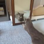 鏡に興味を持つロシ子。