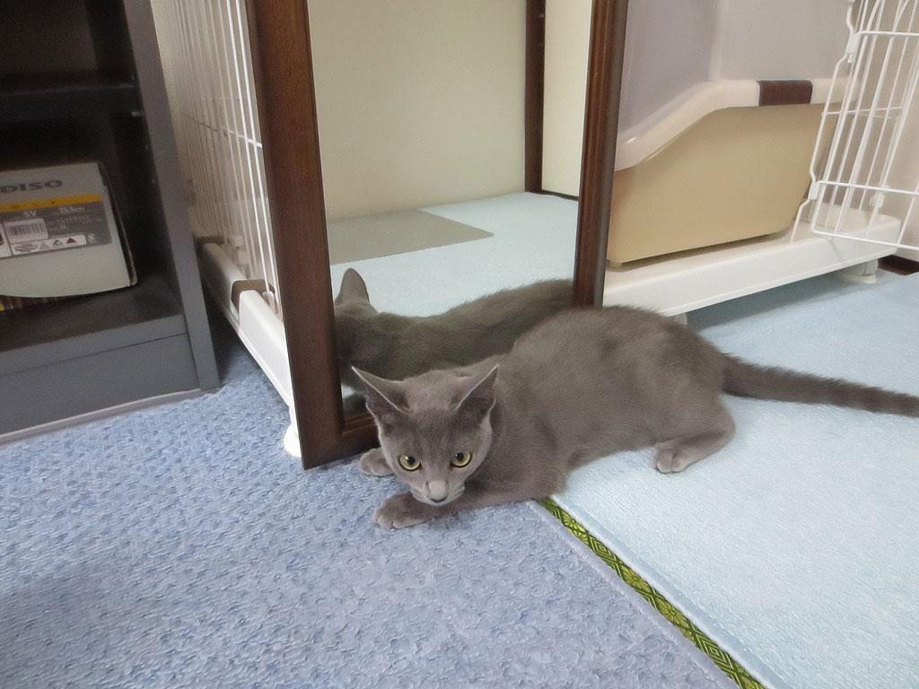 鏡の前に座るロシ子。