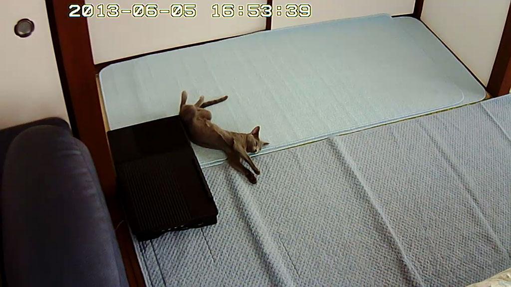 こんな感じでロシ子は寝てます。