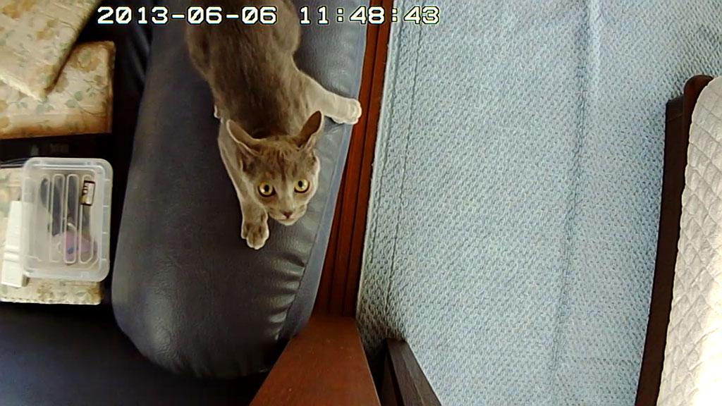Webカメラが気になるロシ子。