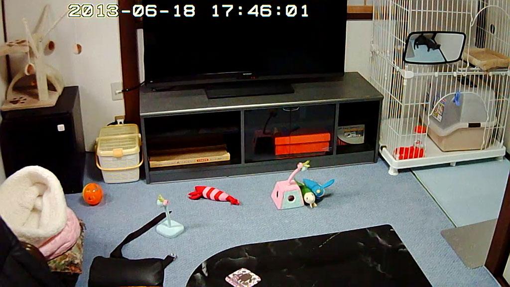 Webカメラで死角にいるロシ子を確認。
