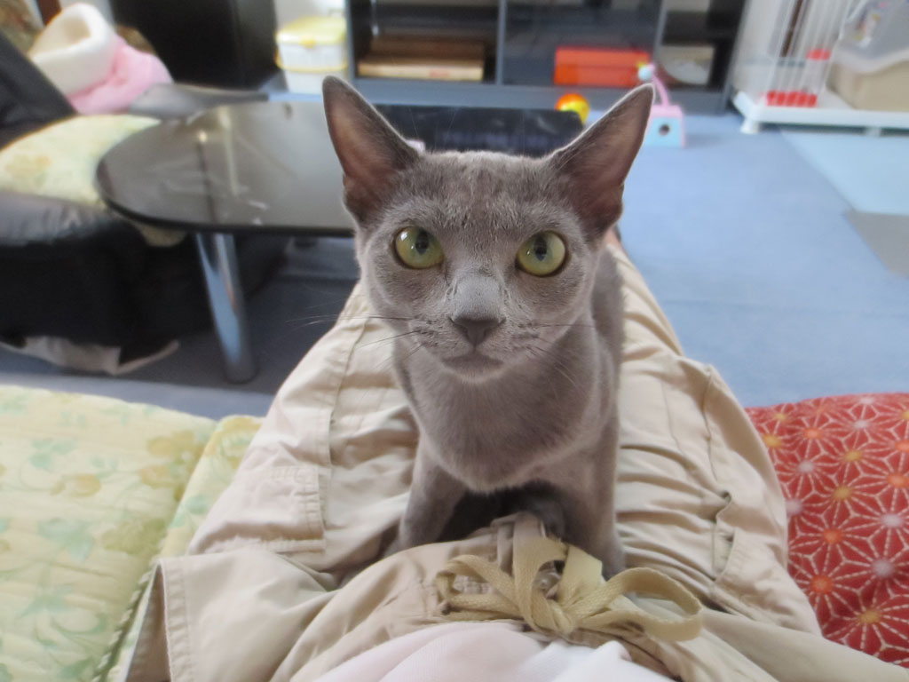 私の膝の上に座るロシ子。