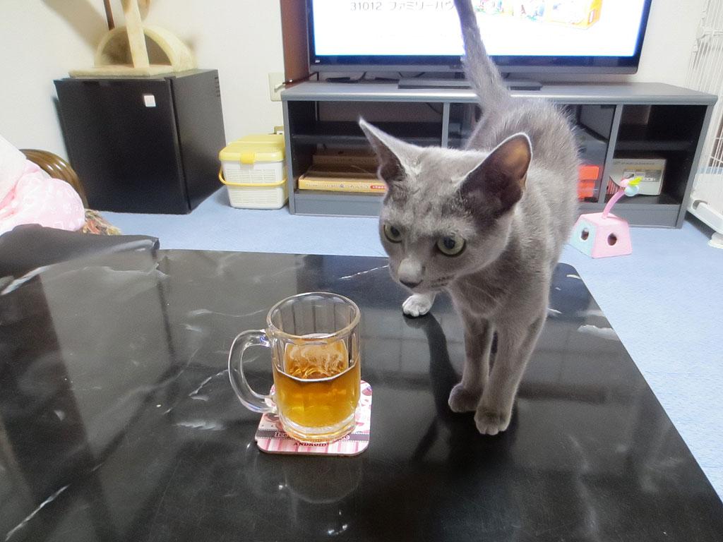 ビールは飲まないロシ子。