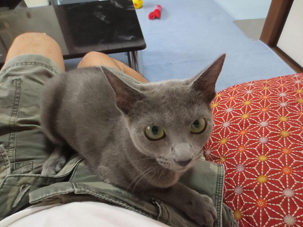 ロシ子から膝の上に乗っています。