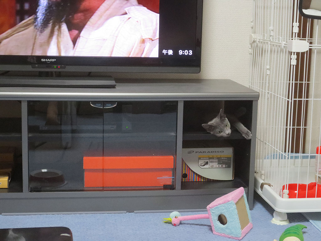ロシ子の新しい隠れ家です。