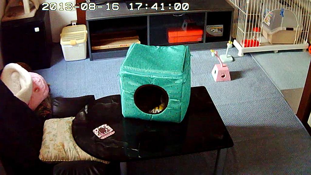 キューブの中で寝るロシ子。