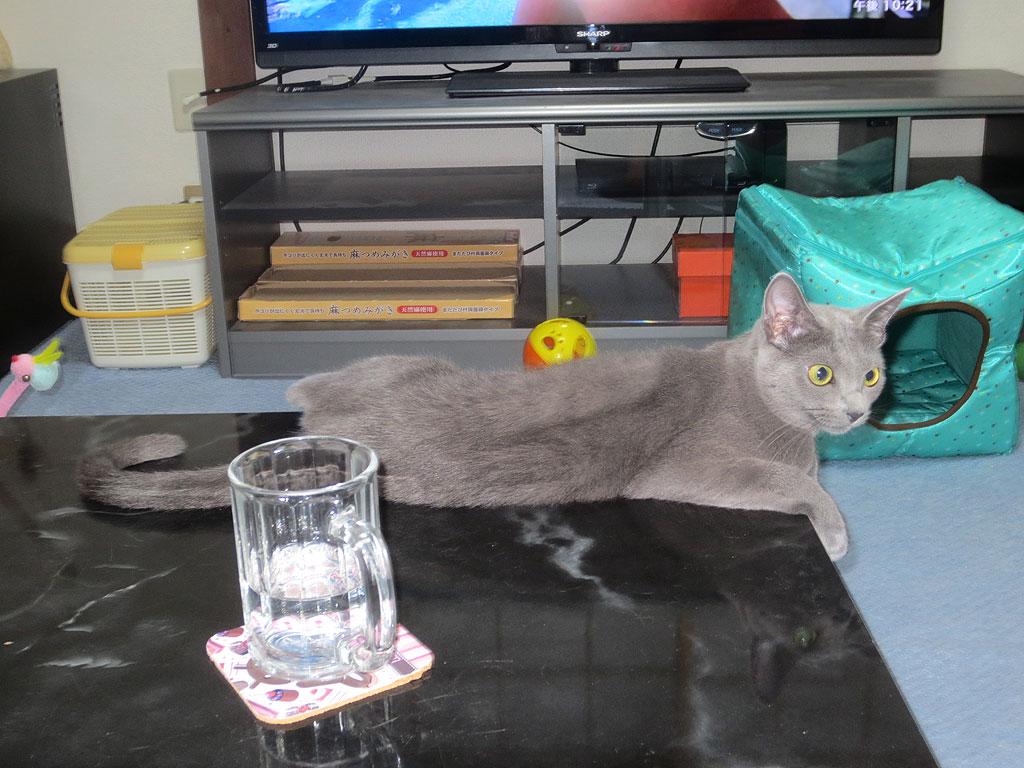 テーブルの上でくつろぐロシ子です。