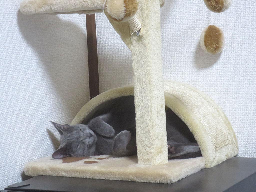 寝てしまったロシ子です。