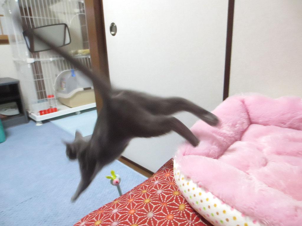 ジャンプするロシ子。