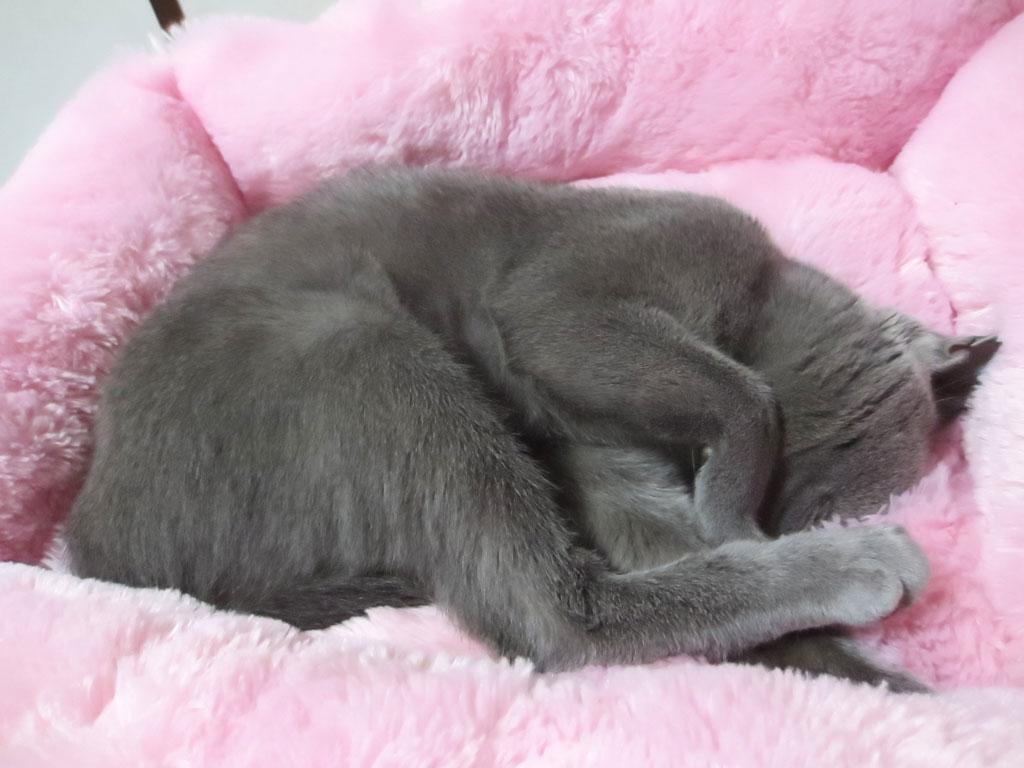 頭をベットに突っ込んで寝るロシ子。