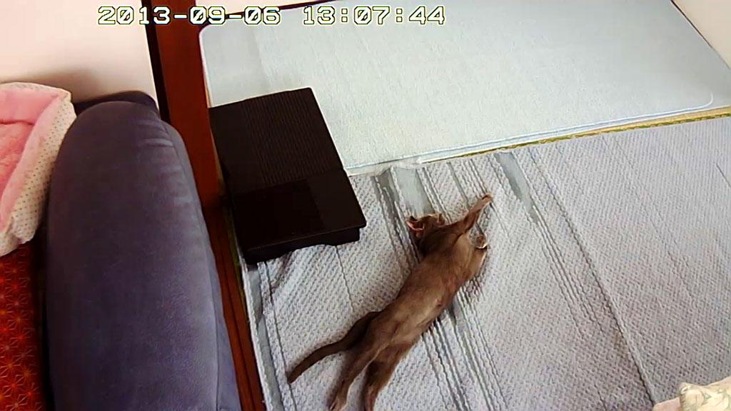 寝がえりをうつロシ子。