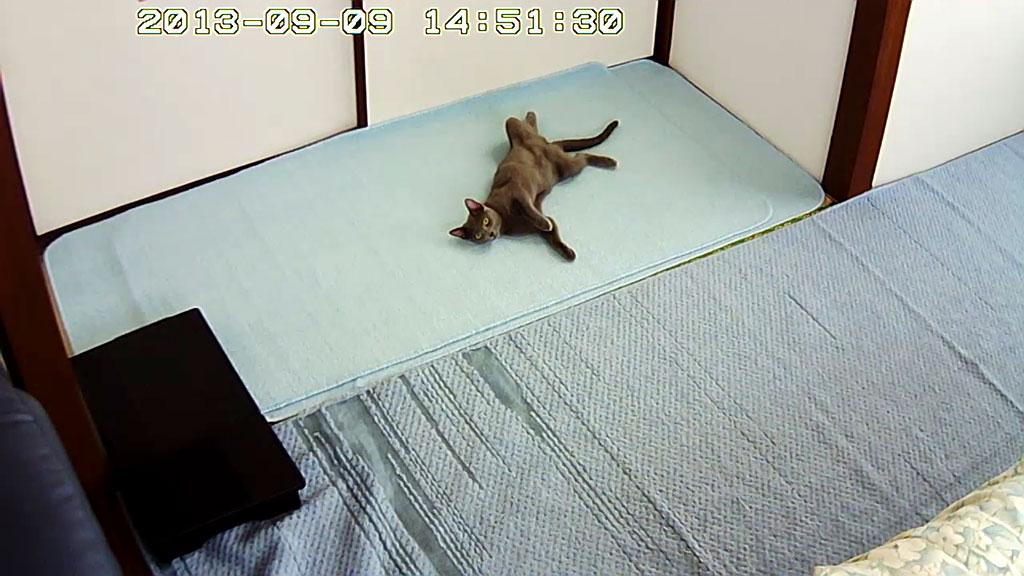 今日は暑くて、仰向けで寝るロシ子。