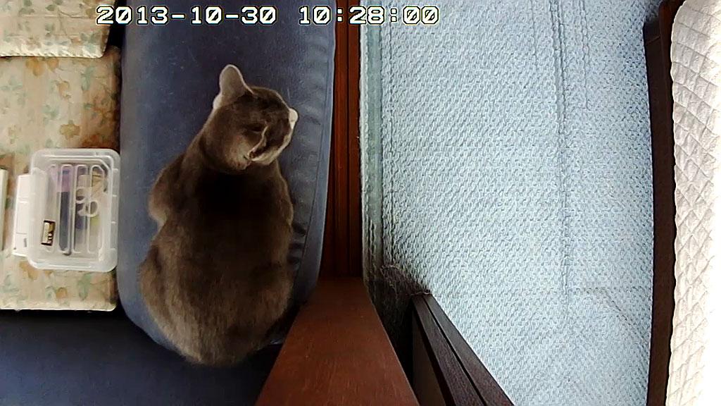 ロシ子を上部から見た写真。