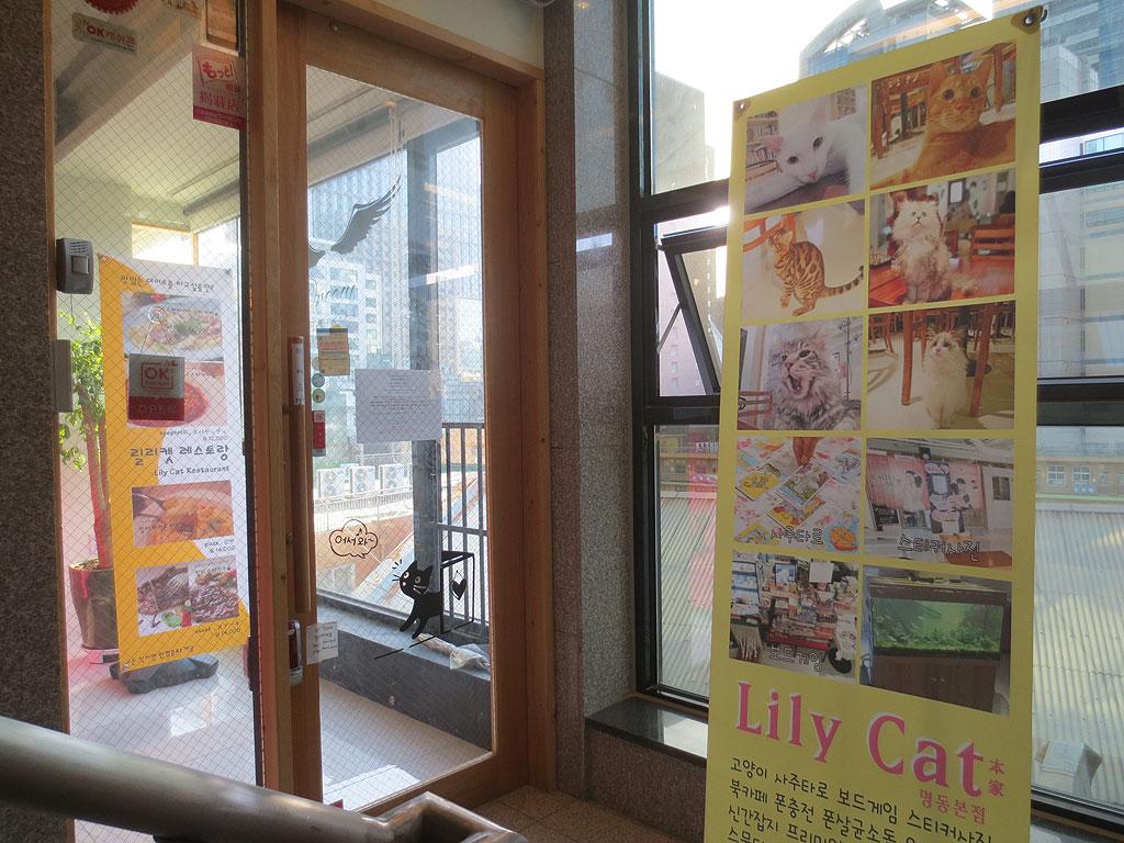 韓国はソウル、明洞の猫カフェ。