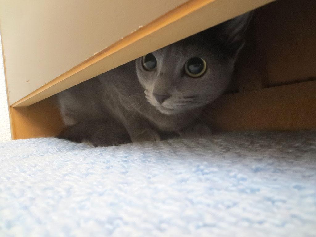 ベットの下に逃げ込むロシ子。