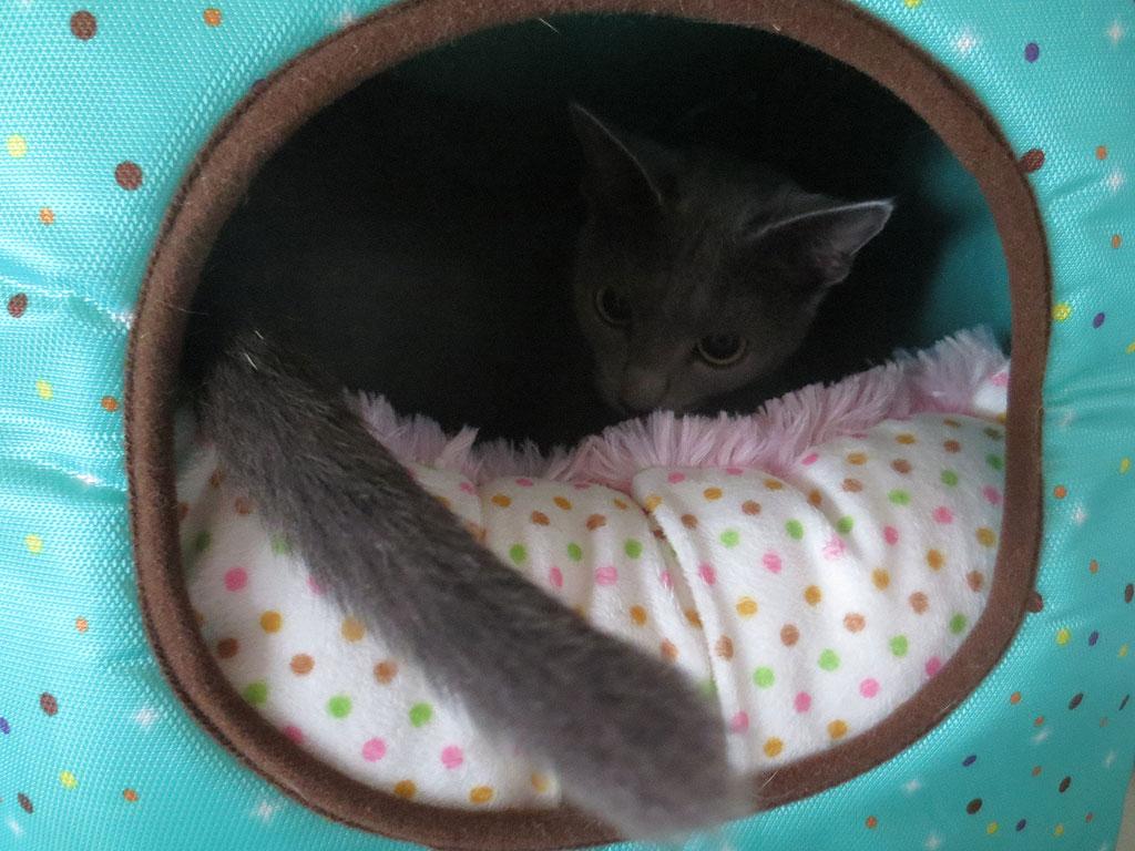 特製猫ベットに、ロシ子を押し入れました。