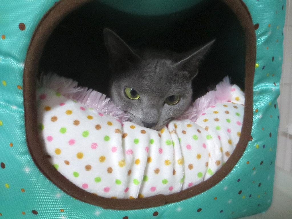 特製猫ベットでくつろぐロシ子。