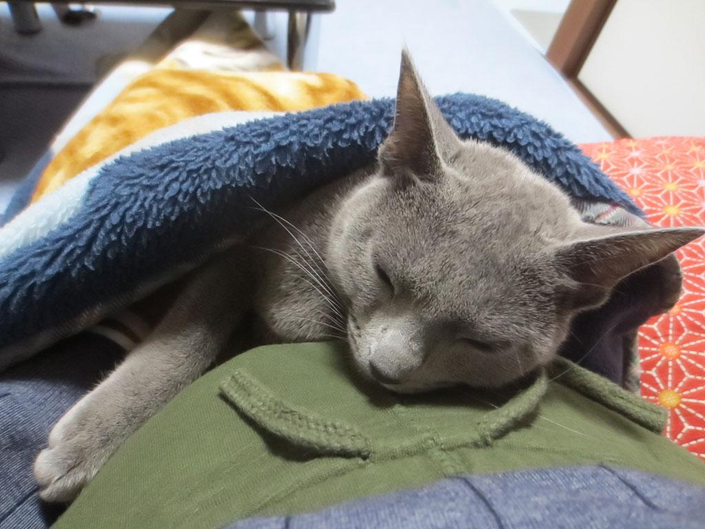 とうとう寝てしまったロシ子。