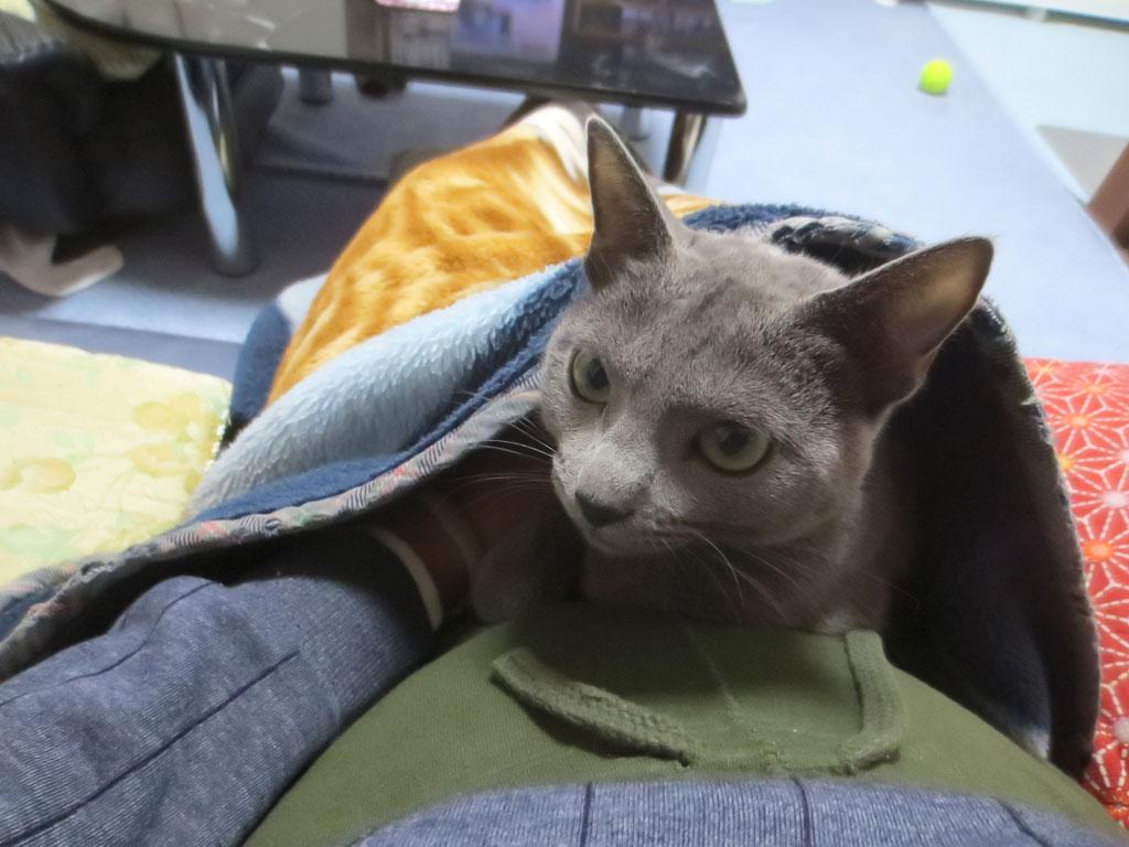 毛布の中に、ロシ子を入れました。