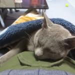 気持ち良さそうに眠るロシ子。