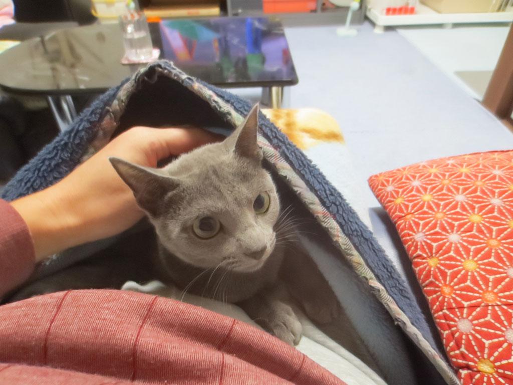 くりくりの目がかわいい、ロシ子。