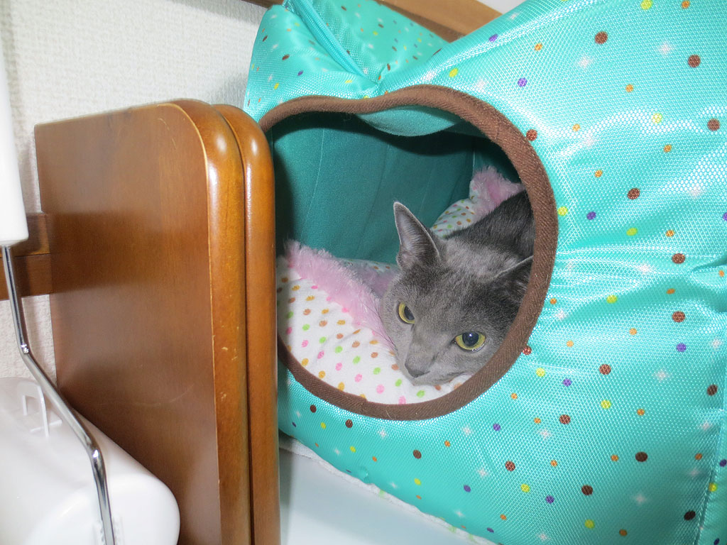 特製猫ベットの中のロシ子。