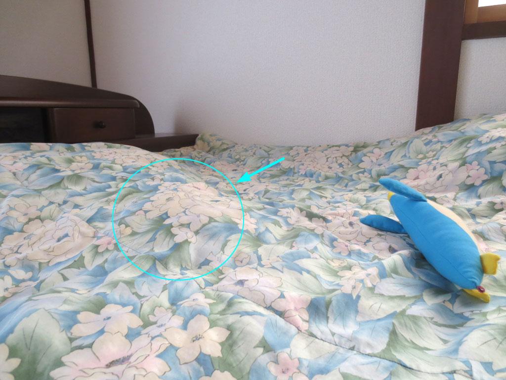 朝寝坊をしたロシアンブルーのロシ子。