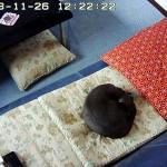 まん丸になって寝てるロシ子。