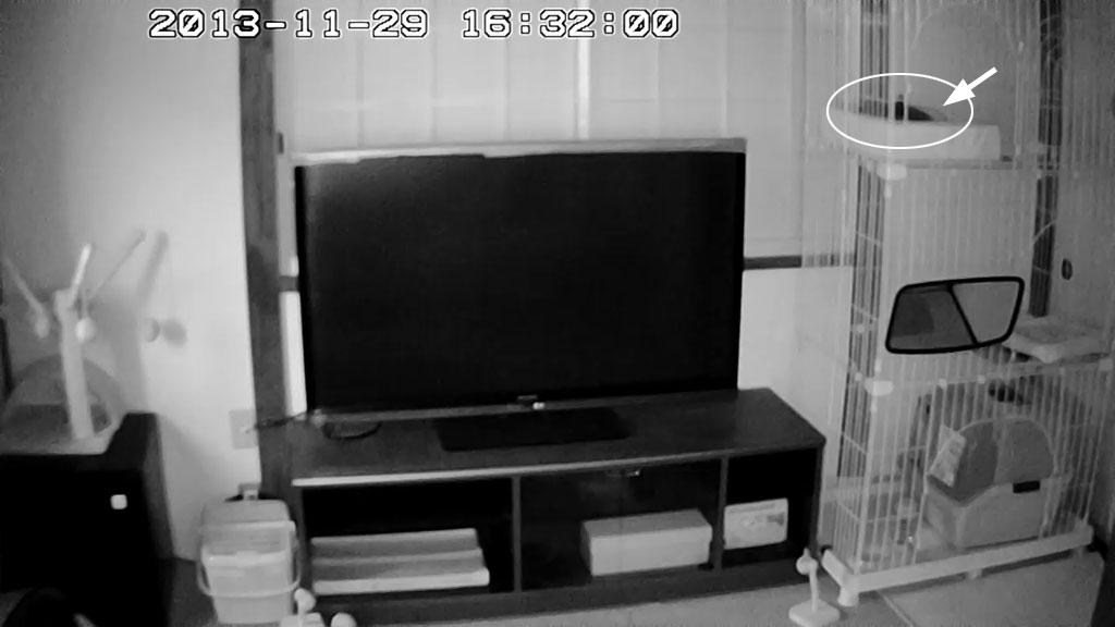 16時半頃に暗視カメラに変わります。