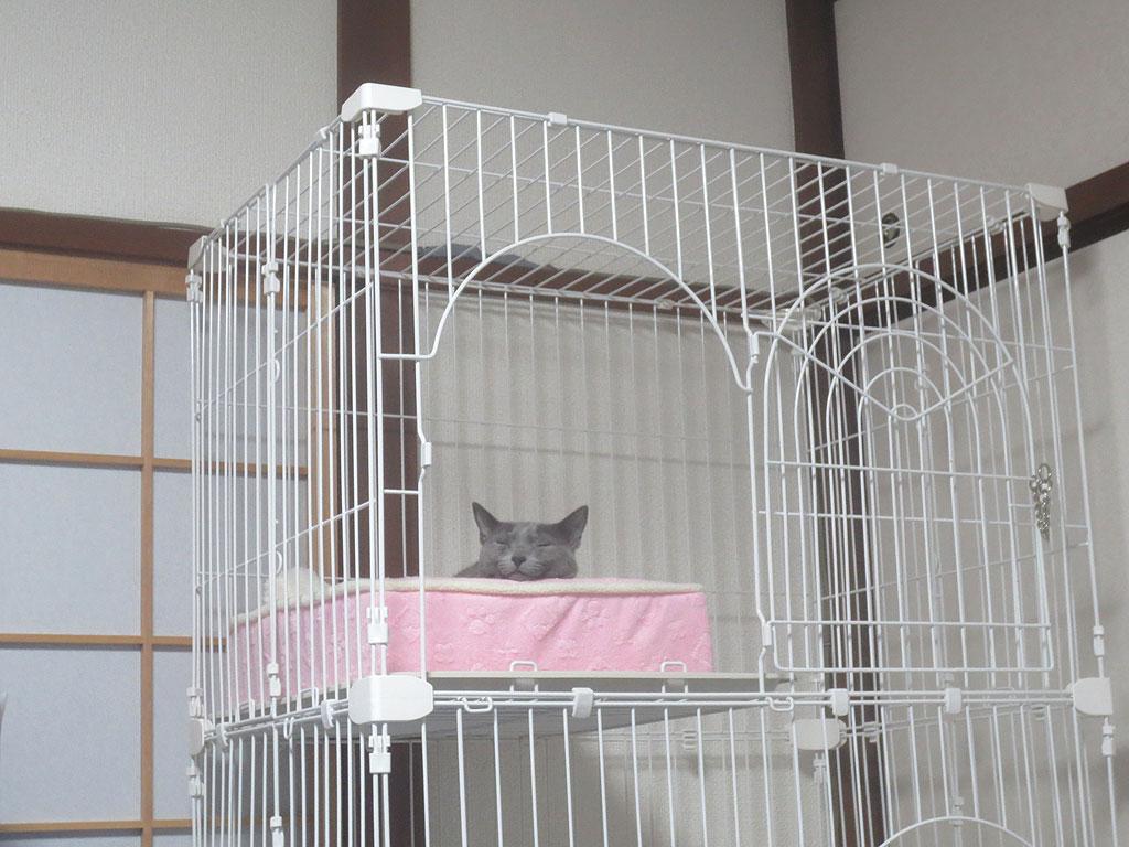 顎を猫ベットのヘリに乗せるロシ子。