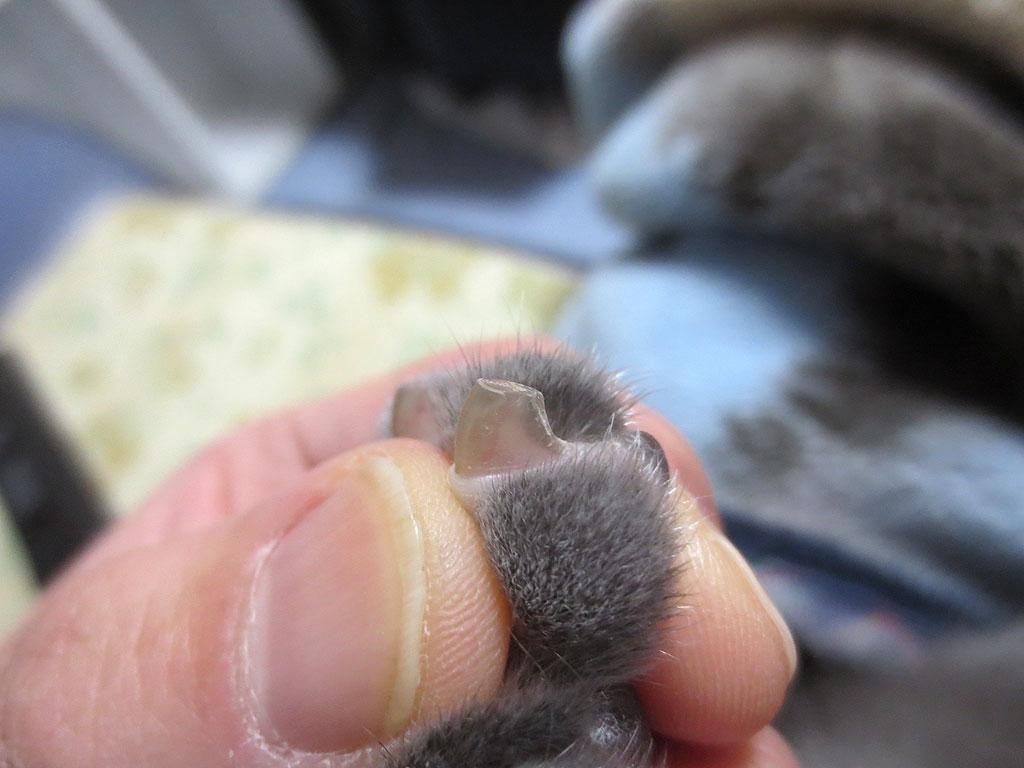 ロシ子の左手の中指の爪。