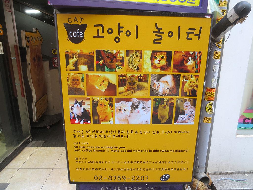 ソウル、明洞の猫カフェです。