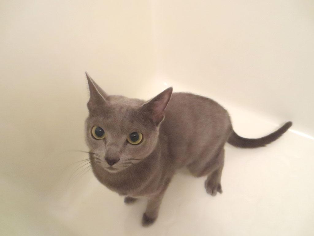 お風呂に到着したロシ子。