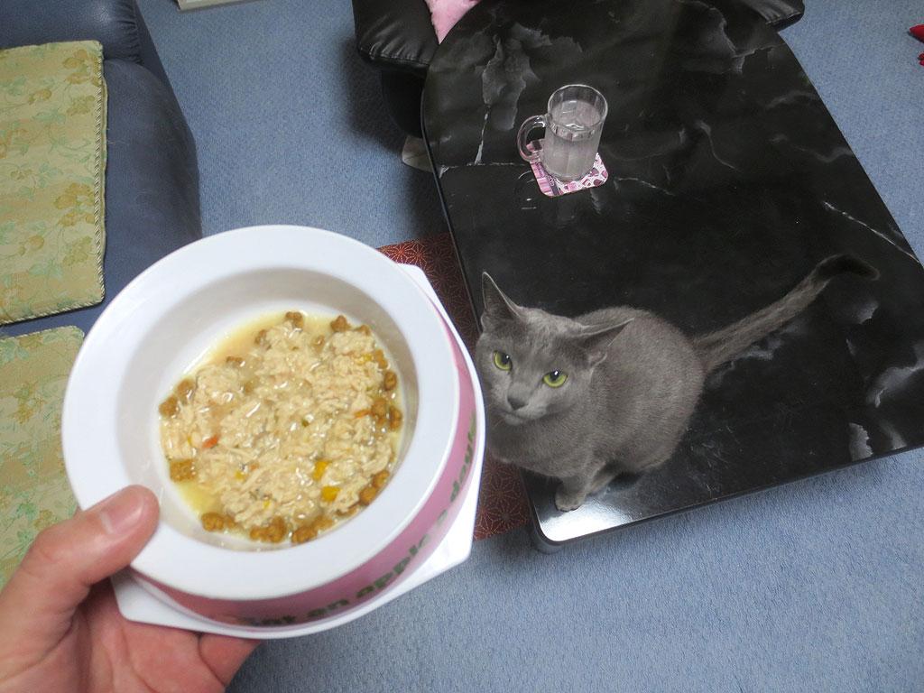 ロシ子にご飯をチラつかせます。