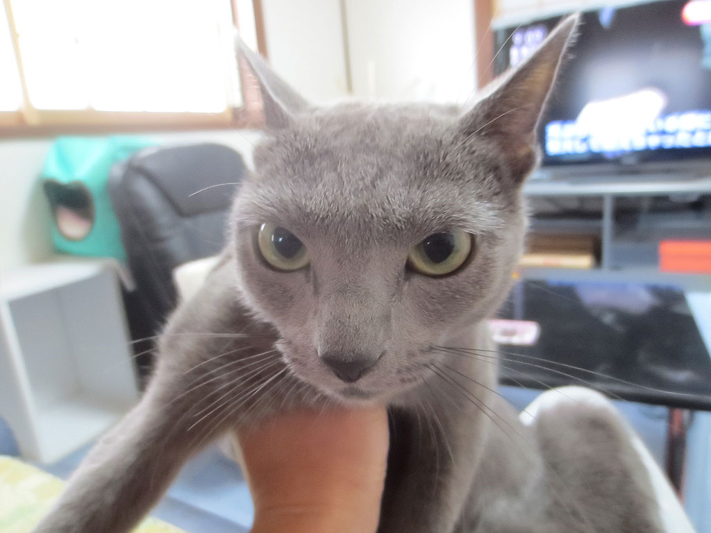 また、ロシ子の瞳孔をチェック。