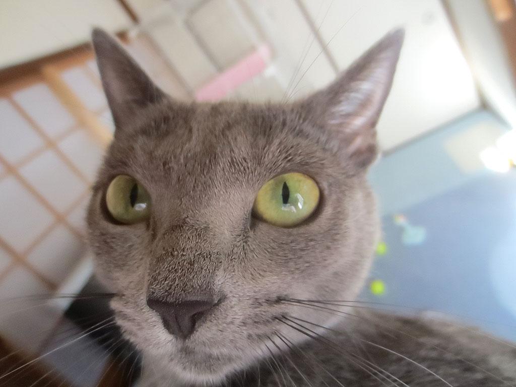 瞳孔が小さくなるロシ子。