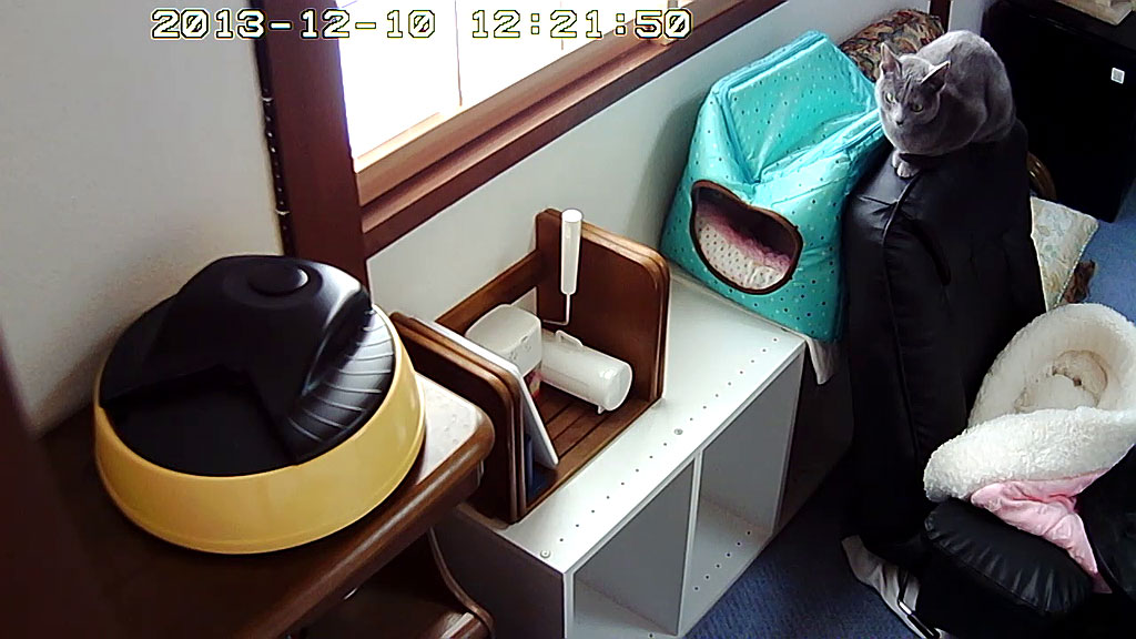座椅子の上で、休憩するロシ子。